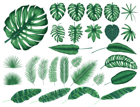 Detailed tropical leaves and plants, vector collection isolated elements Çizim