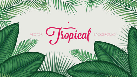 Summer tropical foliage calathea ornata leaves, vector background