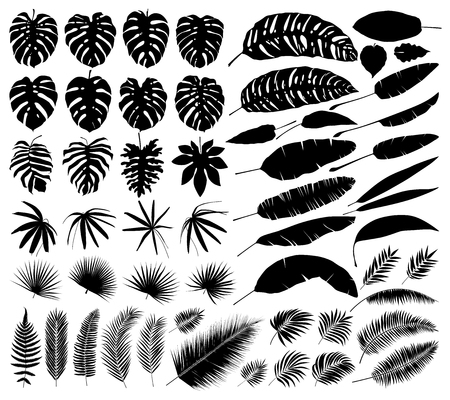 Vector set of silhouettes of tropical leaves, botanical isolated elements Çizim