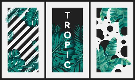 Creative images with tropical leaves on the background of stripes and circles, Illustration for surface invitation, banner, poster, postcards, Vector poster for your design