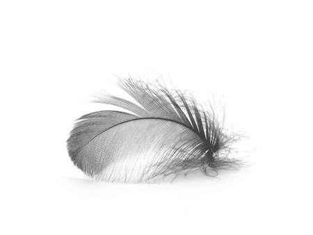 piuma bianca: Piuma nero  Archivio Fotografico