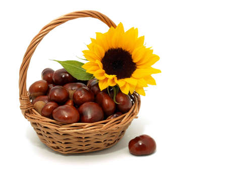 Chestnuts with sunflower on the white background Stock Photo - 7593172