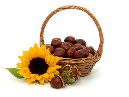 Sunflower with chestnuts on the white background Stock Photo - 7593170