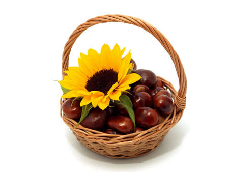 Sunflower with chestnuts on the white background Stock Photo - 7593171