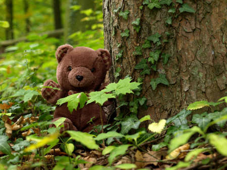 plush toy: Teddy Bear in the forest Stock Photo