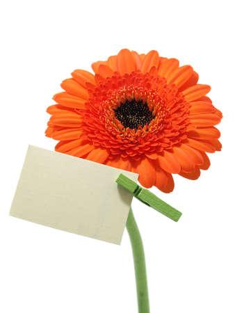 Gerber flower Stock Photo