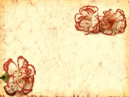 Carnation flowers textured photo