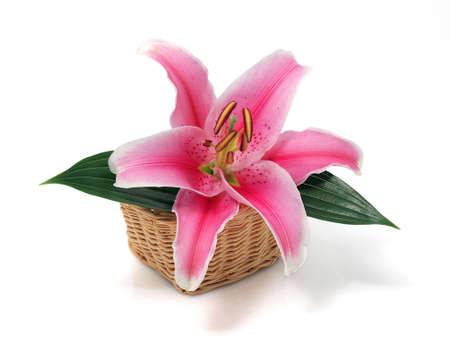 lirio acuatico: Flor de lirio en la cesta