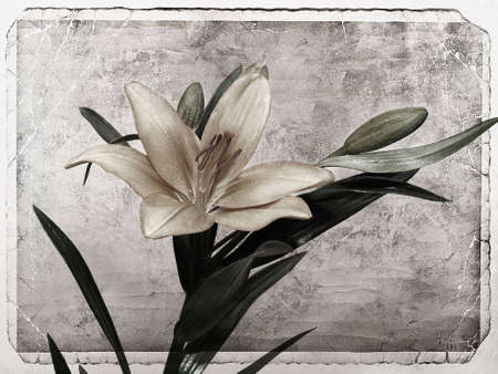 Lily flowers textured photo