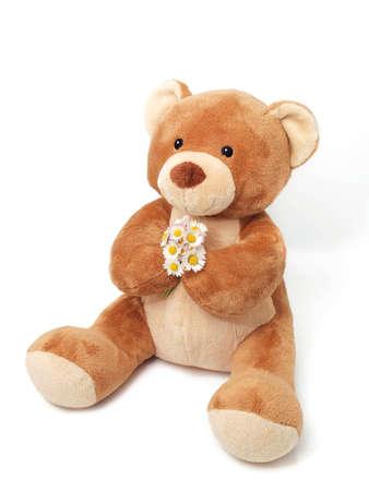 osos de peluche: Oso de peluche sobre fondo blanco