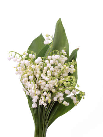 Lily of the Valley  写真素材