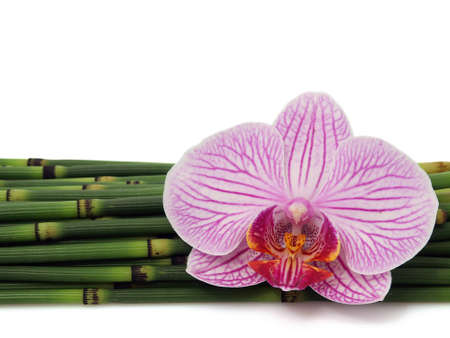 Orchid with bamboo isolated