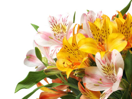 Alstroemeria flowers isolated