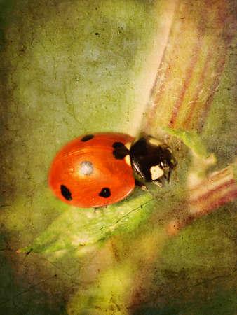 Ladybird textured
