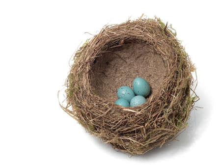 Birds nest with eggs on the white background Stock Photo