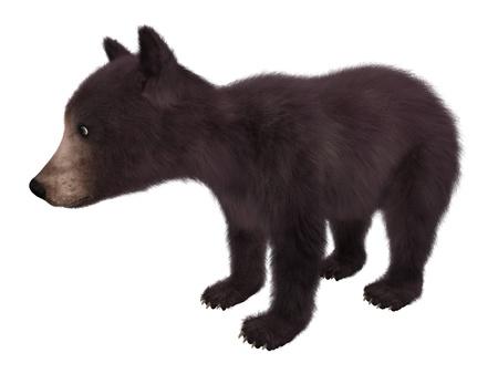 4ecbd8235f7 Black bear cub isolated on white background 3d illustration