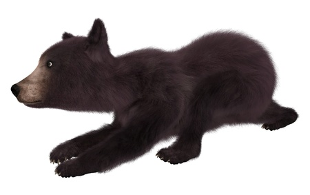 Black bear cub isolated on white background 3d illustration