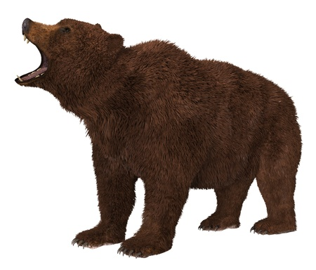 Grizzly Bear isolated on white background 3d illustration Imagens