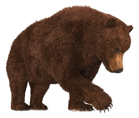 Grizzly Bear isolated on white background 3d illustration Stock Photo