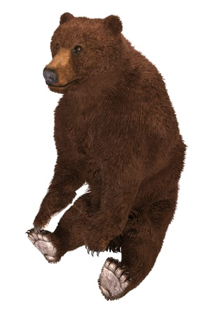 3D illustration grizzly bear isolated on white background