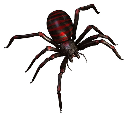 Spider 3d illustration isolated on the white background