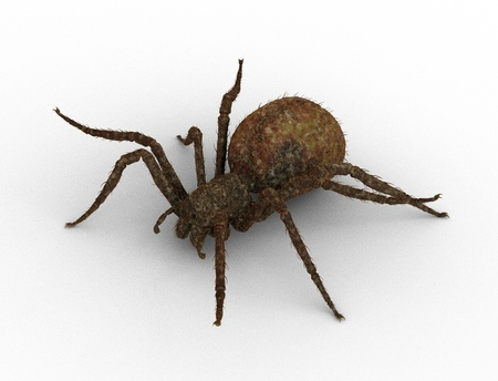 Spider isolated on the white background 3d illustration Stock Photo