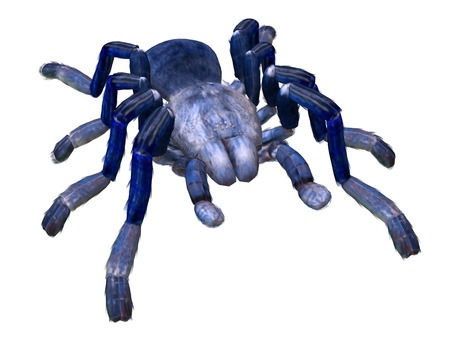 Tarantula spider 3d illustration isolated on the white background Stock Illustration - 118917084