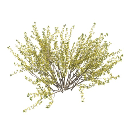 Bush 3d illustration isolated on the white background Stockfoto