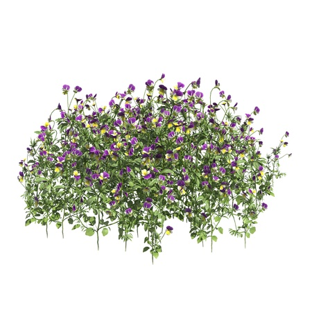 Plants 3d illustration isolated on the white background Stockfoto