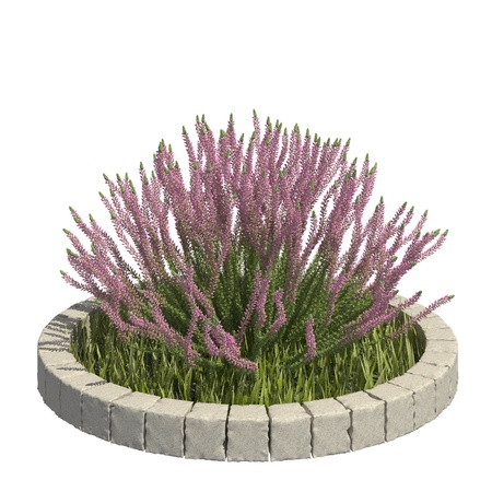 Garden plants 3d illustration isolated on the white background