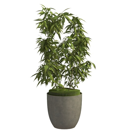 Indoor plant 3d illustration isolated on the white background Stock Photo