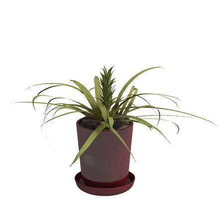 Home plant 3d illustration isolated on the white background