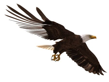 3D illustration bald eagle in flight isolated on white