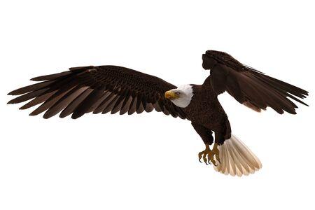 3D illustration bald eagle in flight isolated on white Reklamní fotografie