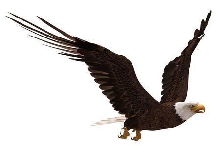 Ilustración 3D águila calva en vuelo aislado en blanco Foto de archivo