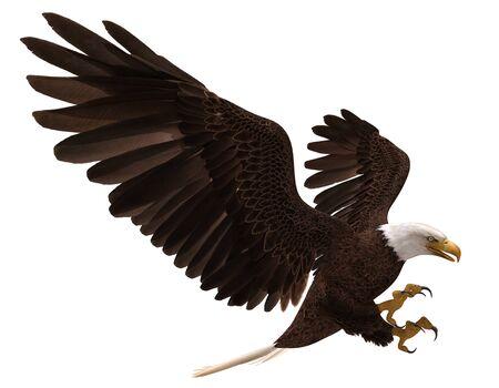 Aquila calva dell'illustrazione 3D in volo isolata su white Archivio Fotografico