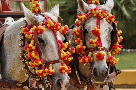 festooned: Horses festooned in fair, horse decked