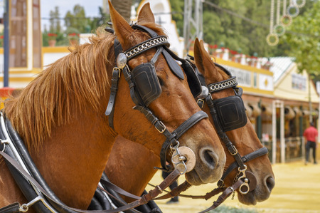 festooned: Horses festooned in fair, horse decked, Jerez de la Frontera