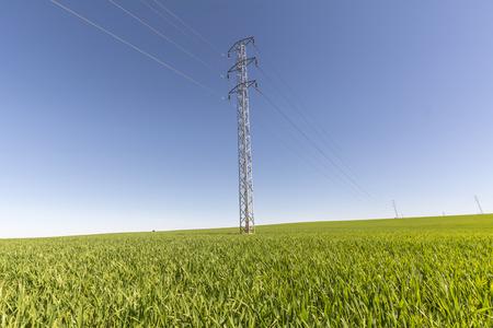 megawatts: Electric tower in green field, wheat crop