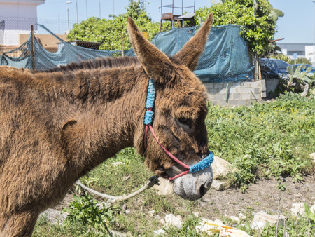 cartage: Donkey in the field