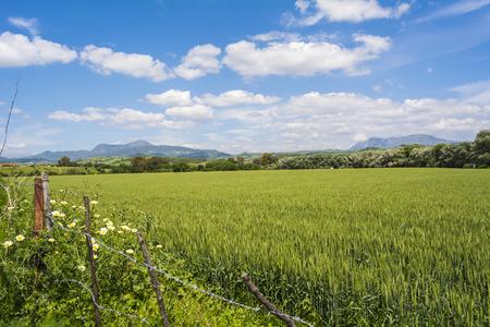dreamscape: Natural landscape valley unripe wheat hardvest