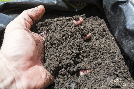 mulch: Mulch in a sack for the orchard, garden or field