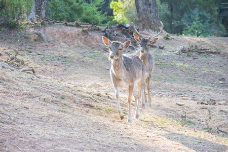 Deer (Cervus elaphus) in the natural park of Cazorla, Jaen, Spain