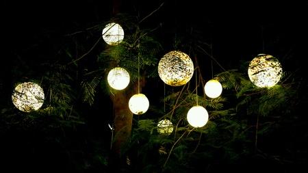 dark: Warm light globes in dark tree with dark background.