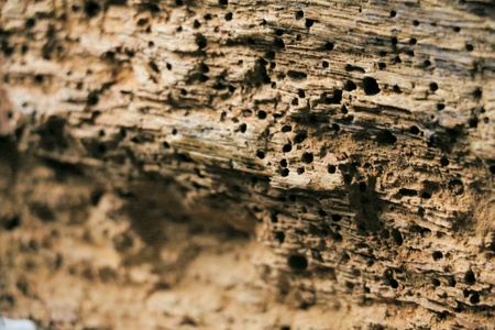macro photography: Macro photography termite damage in wood. Stone cliff with caves.