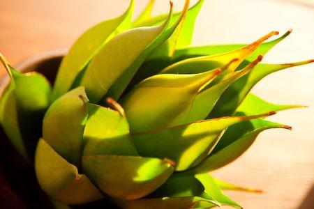 indoor shot: Flor tropical verde, rodado en interiores macro
