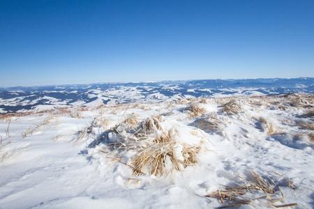 Frozen winter grass, horizontal shot from up photo