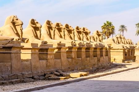 Rams in the Karnak temple in Luxor, Egypt