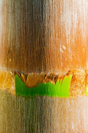 ruggedness: Dettaglio della trama di una palma tropicale esotico