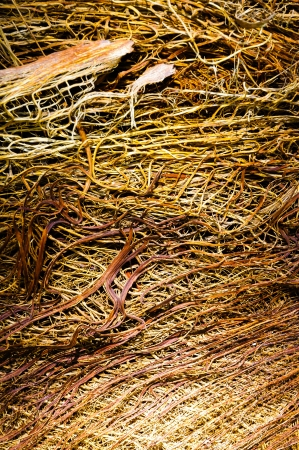 ruggedness: Detail of the texture of an exotic tropical palmtree Stock Photo